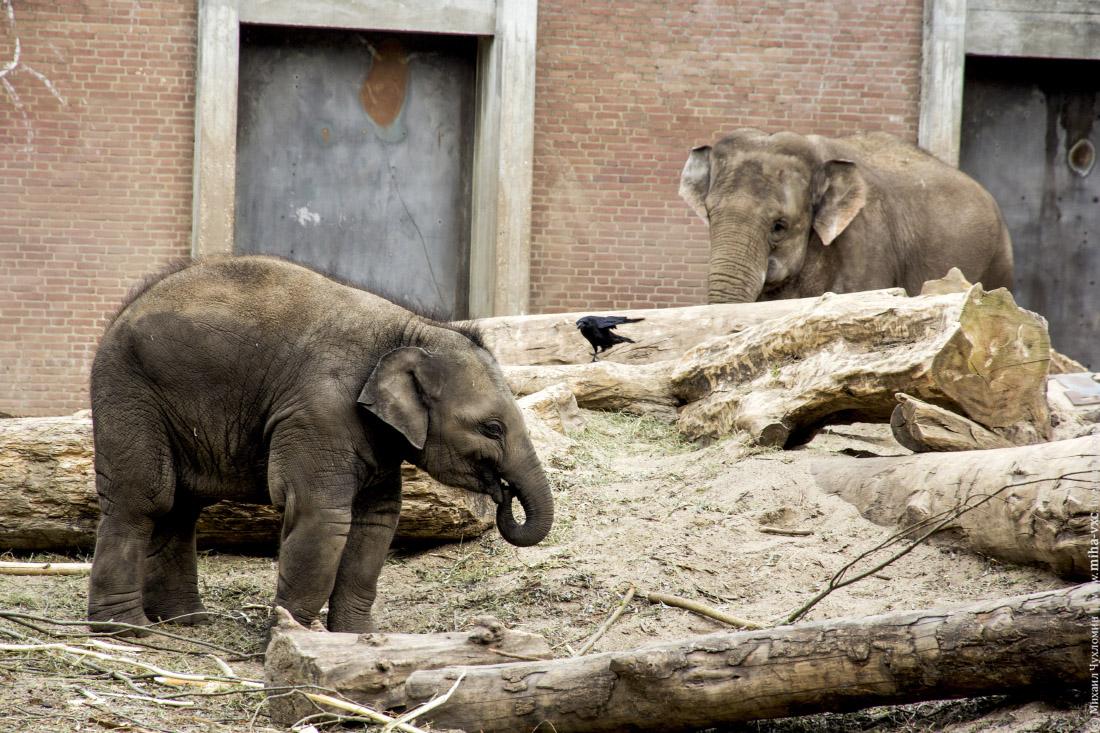Слоник кушает